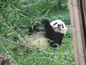 China_2009_0007