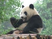 China_2009_0010