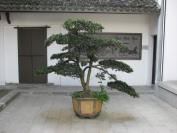 China_2009_0018