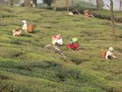 Indien_2009_0042
