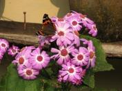 Indien_2009_0045