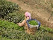Indien_2009_0046