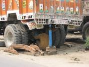 Indien_2009_0047
