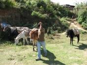 Buthan_Trekking_2010_0002