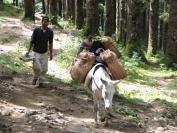 Buthan_Trekking_2010_0008