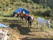 Buthan_Trekking_2010_0015