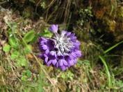 Buthan_Trekking_2010_0023