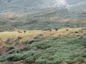 Buthan_Trekking_2010_0053