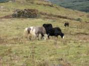 Buthan_Trekking_2010_0055