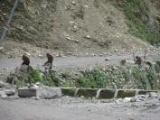Indien_2010_0004