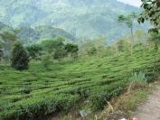 Indien_2010_0056