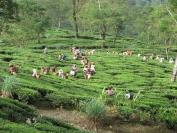 Indien_2010_0058