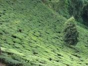 Indien_2010_0059