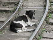 Indien_2010_0093