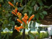 Indien_2012_Darjeeling_0013