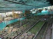 Indien_2012_Darjeeling_0023