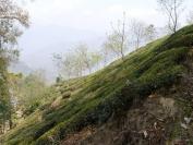 Indien_2012_Darjeeling_0033