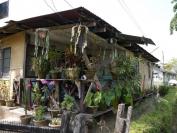 Indien_2012_Darjeeling_0034