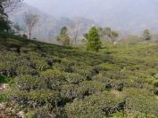Indien_2012_Darjeeling_0064