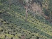 Indien_2012_Darjeeling_0065
