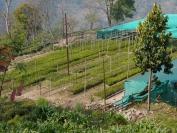 Indien_2012_Darjeeling_0067