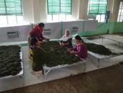 Indien_2012_Darjeeling_0069