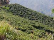 Indien_2012_Darjeeling_0075