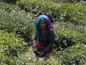 Indien_2012_Darjeeling_0076