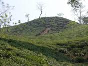 Indien_2012_Darjeeling_0077