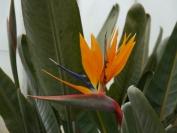 Indien_2012_Darjeeling_0090