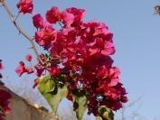 Indien_2012_Rajasthan_0012