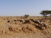 Indien_2012_Rajasthan_0072