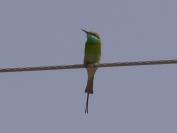 Indien_2012_Rajasthan_0074