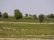 Indien_2012_Rajasthan_0076