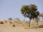 Indien_2012_Rajasthan_0077