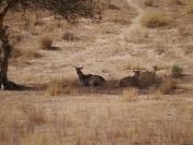 Indien_2012_Rajasthan_0081
