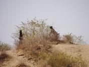 Indien_2012_Rajasthan_0083