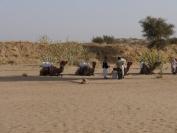 Indien_2012_Rajasthan_0093