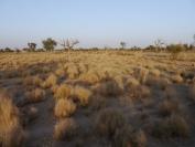 Indien_2012_Rajasthan_0094