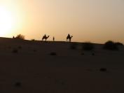 Indien_2012_Rajasthan_0095