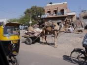 Indien_2012_Rajasthan_0102