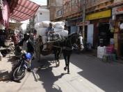 Indien_2012_Rajasthan_0120