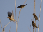 Indien_2012_Rajasthan_0130