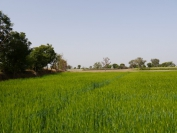 Indien_2012_Rajasthan_0140