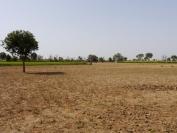 Indien_2012_Rajasthan_0141