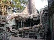 KambodschaT_2014_054