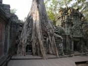 KambodschaT_2014_055