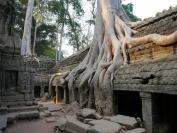 KambodschaT_2014_058