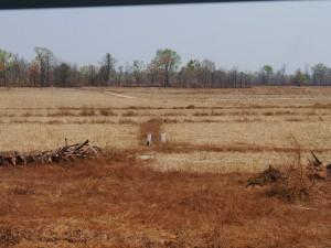 Senmonorom - Banlung: Lumphat, gerodetes Gebiet für Landwirtschaft