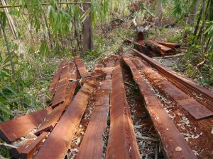 Banlung Dschungel-Trekking: Holzschlag